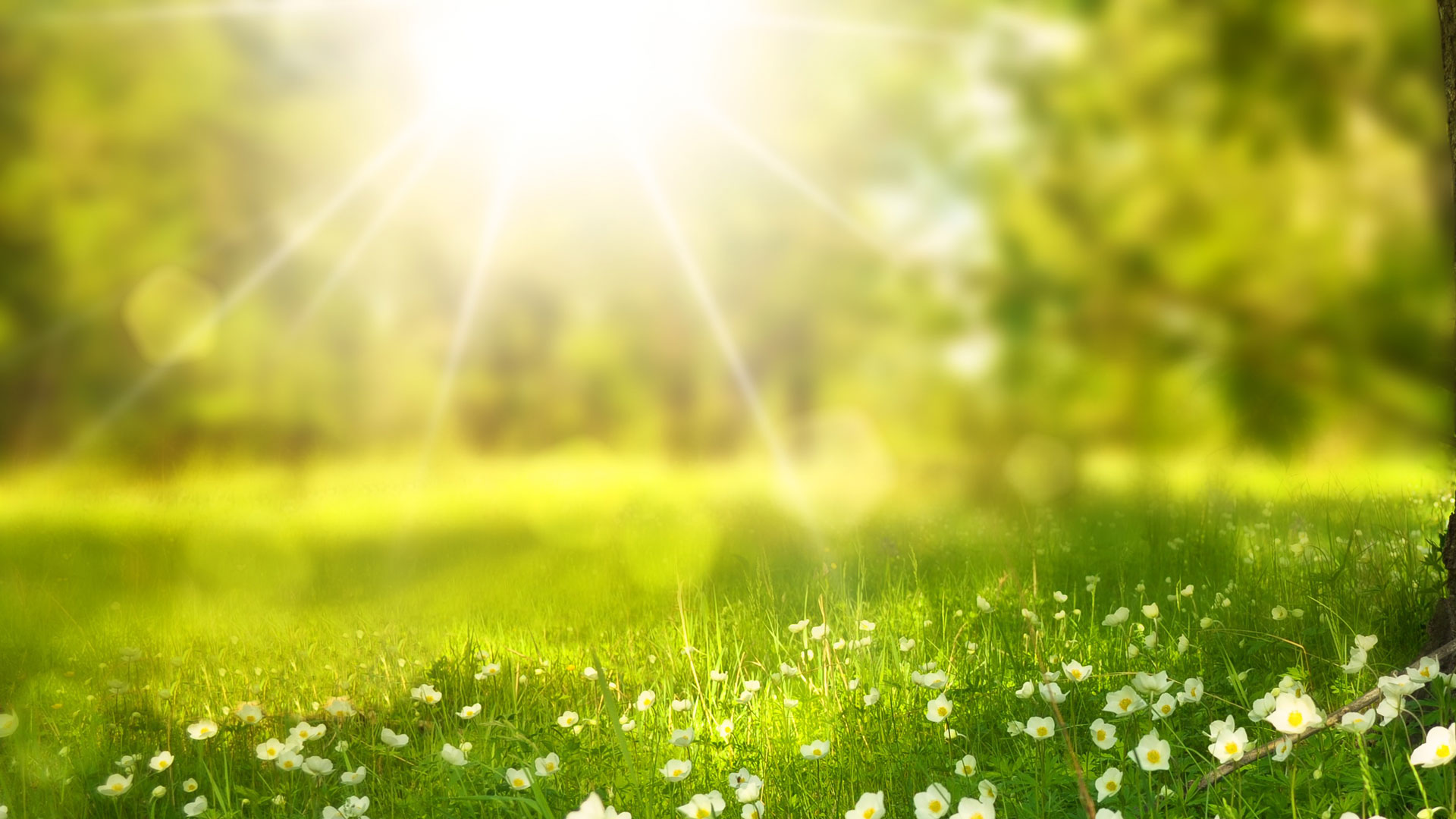Springtime Sun